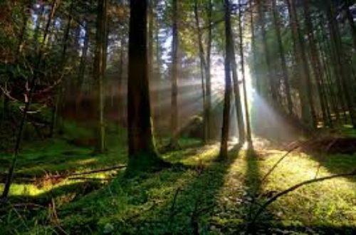 Article : La  providence de Dieu